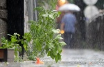 광복절 전국 대체로 흐리고 비…동해안 거센 비바람