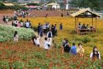 [주말매거진OFF]화유십일홍 : 열흘 붉은 꽃은 있다.