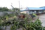 태풍 '링링' 강풍에 보령서 70대 할머니 등 3명 사상