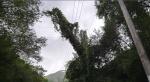 초속 41.2m 강풍에 '휘청'…넘어지고 덮치고 강원 피해 속출