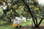 강원농협 태풍 피해 농가 돕기