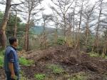 강릉 야산 폐기물 쌓여 소나무 집단 고사