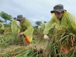 속초 태풍 피해농가 일손돕기