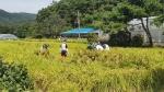 공군 8전비 농작물 피해복구활동