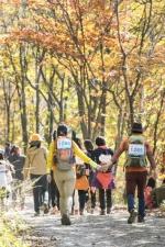 봄꽃의 유혹, 가을숲의 힐링 사계절 발길 잡는 국민쉼터