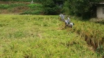 103정보통신단 태풍 피해농가 봉사