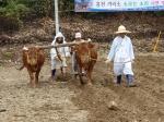홍천 겨리소 모는 소리 시연