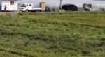 잇딴 태풍에 벼 4.1% 쓰러져…7년만에 쌀 공급 5만t 모자란다
