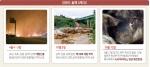 산불·태풍·돼지열병 '3재' 덮쳐, 강원도는 숨가쁘다