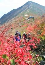울산바위-비선대 호위 속 등장하는 붉은 단풍
