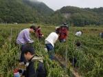 정선군청 공무원 농가일손돕기