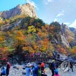 """""""만산홍엽 불타네"""" 전국 가을빛 절정…너도나도 산으로"""