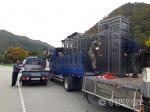 멧돼지 포획틀 100개로 확대...총기포획팀 첫날 7마리 포획