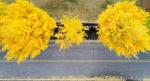 깊어가는 가을의 정취