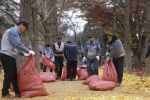 서울 은행잎 남이섬서 환골탈태
