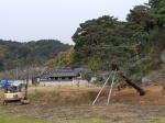 '호송설 상징' 임경당 소나무 살리기 안간힘
