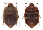 오대산국립공원사무소 국내 미기록 곤충 10종 발굴