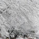 """""""강원, 올겨울 평년보다 덜 춥겠으나 큰 추위 여러 번"""""""
