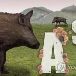 철원·파주 멧돼지 3마리 폐사체에서 ASF 바이러스 확진