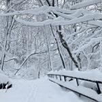 태백산국립공원의 설경