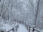 눈가뭄 태백, 수년 만에 은빛 설경 연출