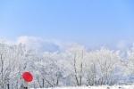 가지마다 걸려있는 하얀 상고대 검은 황금땅 위 피어난 순백 겨울
