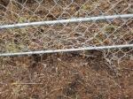 양구 광역울타리 설치 지역업체 배제 물의