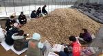 홍천군청직원,감자농가 일손돕기