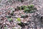 홍천 대미산성 1300여년 전 우물터 발견