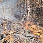 영월 상동읍 내덕리 야산에서 산불 발생