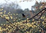 꽃샘추위에 쌀쌀한 일요일 아침…미세먼지 '보통'