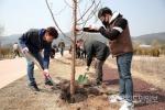 양구군 나무심기 행사 개최