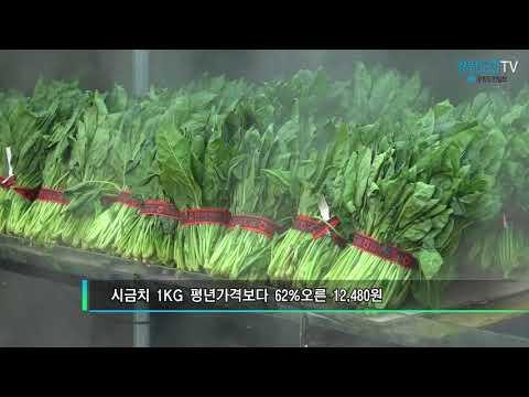 폭염으로 채소값 고공행진…추석물가에도 영향
