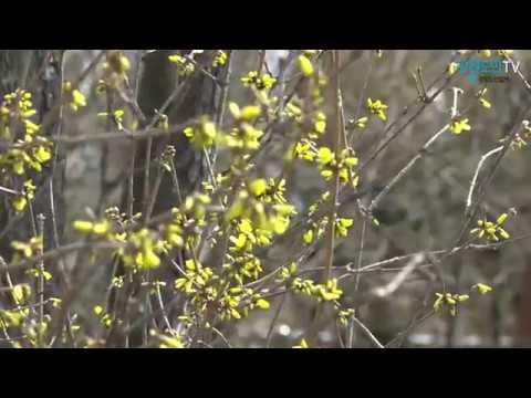 완연한 봄 날씨의 강원도