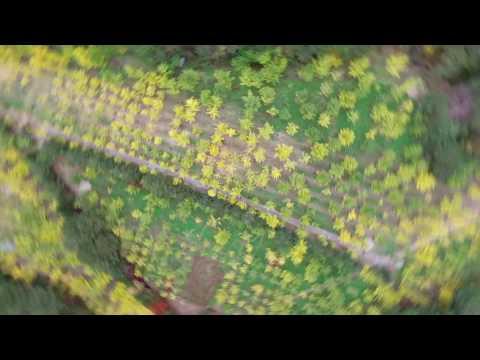 노랑물결 넘실 대는 단풍성지 '홍천은행나무숲'을 가다