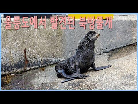 봄마실 나온 북방물개