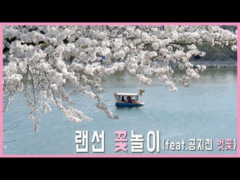 코로나19 감염 걱정없는 랜선 꽃놀이(feat.공지천 벗꽃)