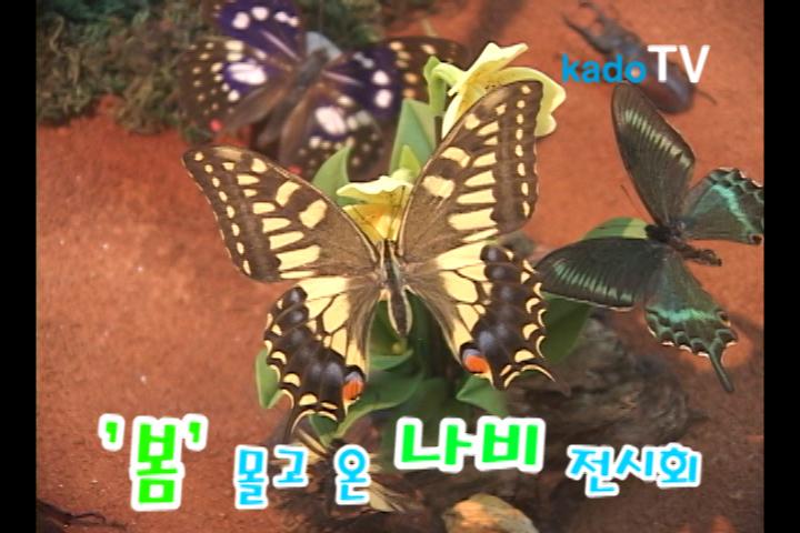 '봄' 몰고 온 나비전시회