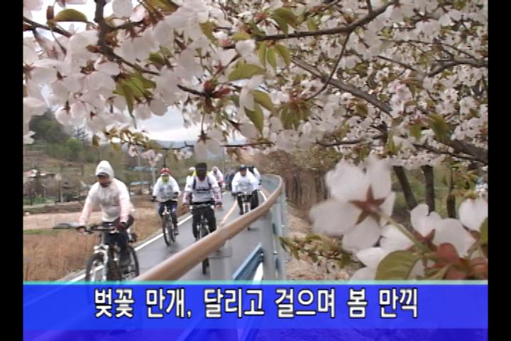 벚꽃 만개, 달리고 걸으며 봄 만끽